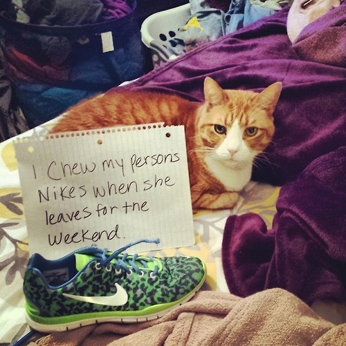 catshaming1