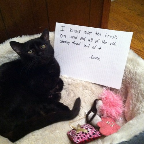 catshaming3